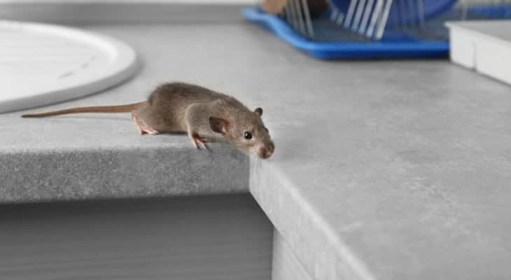 clean dishes after mice