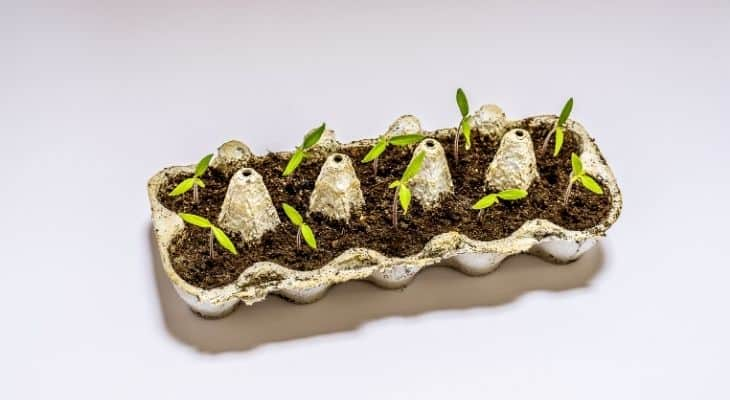 are egg cartons biodegradable