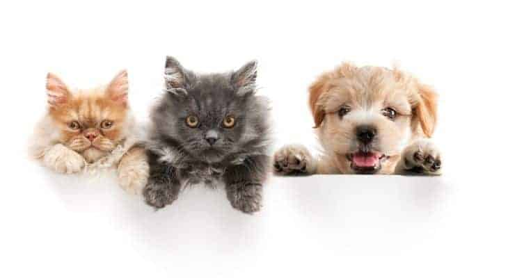 essential oil safe for pets